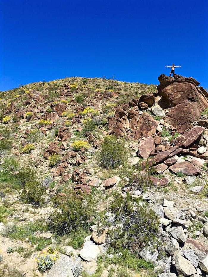 anza borrego desert state park super bloom borrego springs california travel blog blogger justin walter atwjustin.com
