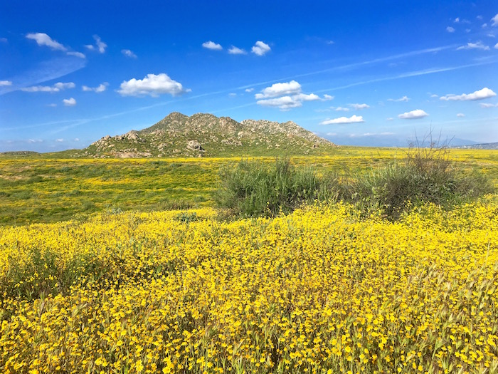 lake perris super bloom southern california state park atwjustin.com