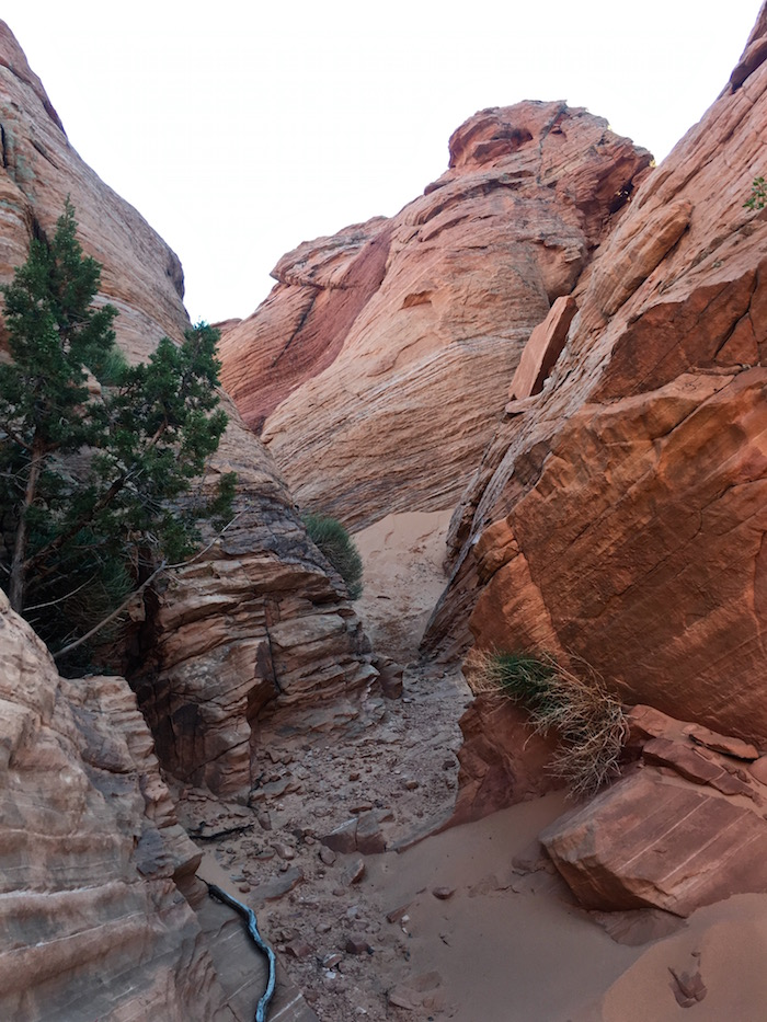 Red Cliffs Desert Reserve visit st george utah