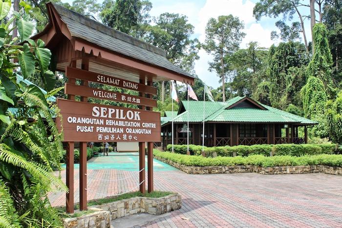10 Ways to Discover Sabah Malaysia Borneo Sepilock Orangutan Rehabilitation Centre