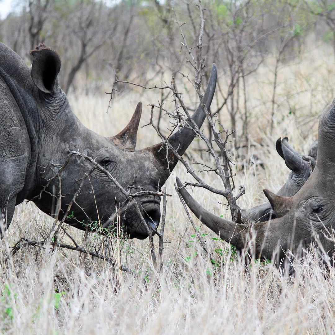 Sabi Sabi Private Game Reserve South Africa rhino
