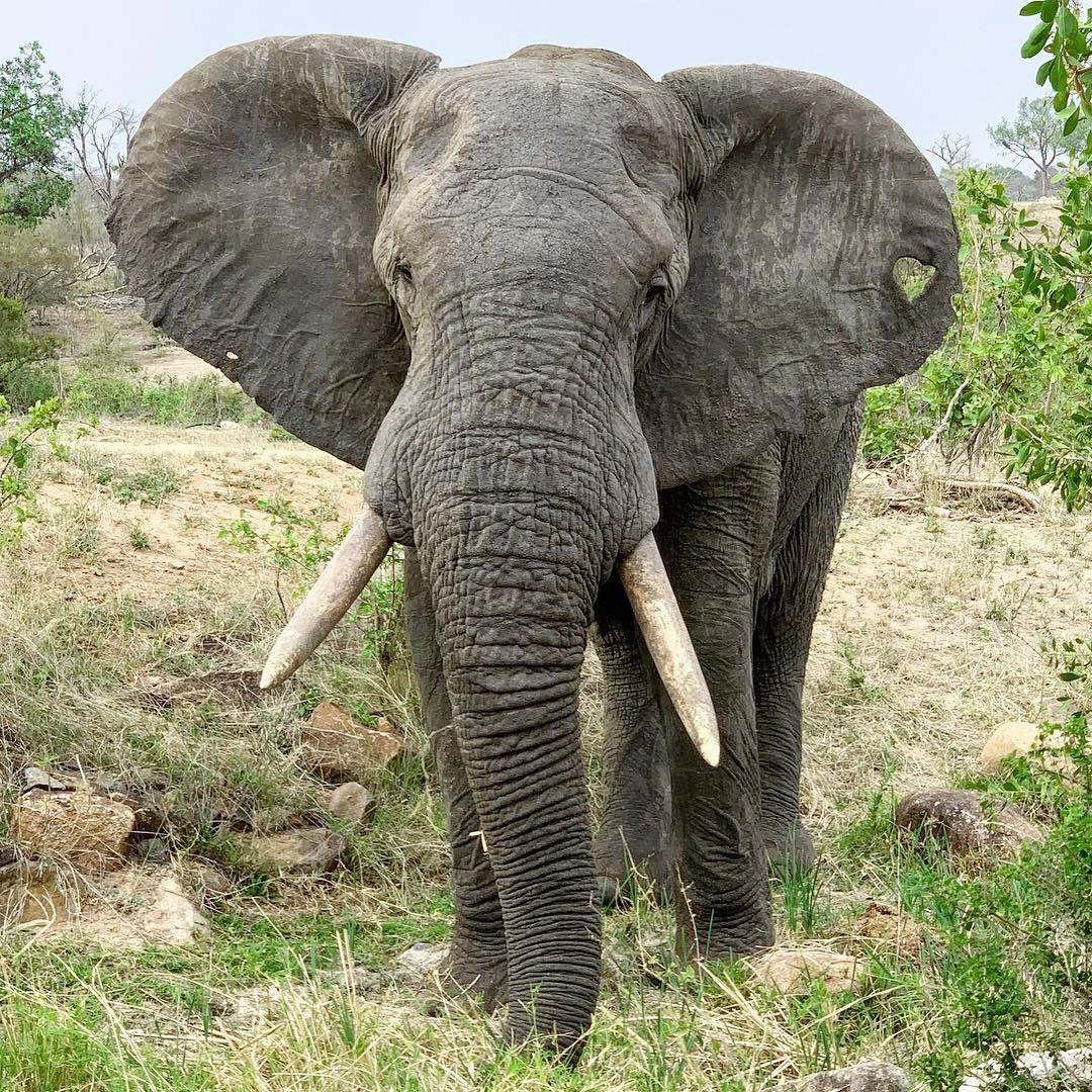 Sabi Sabi Private Game Reserve South Africa elephant