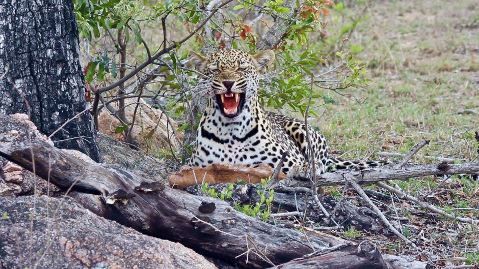 Sabi Sabi Private Game Reserve South Africa