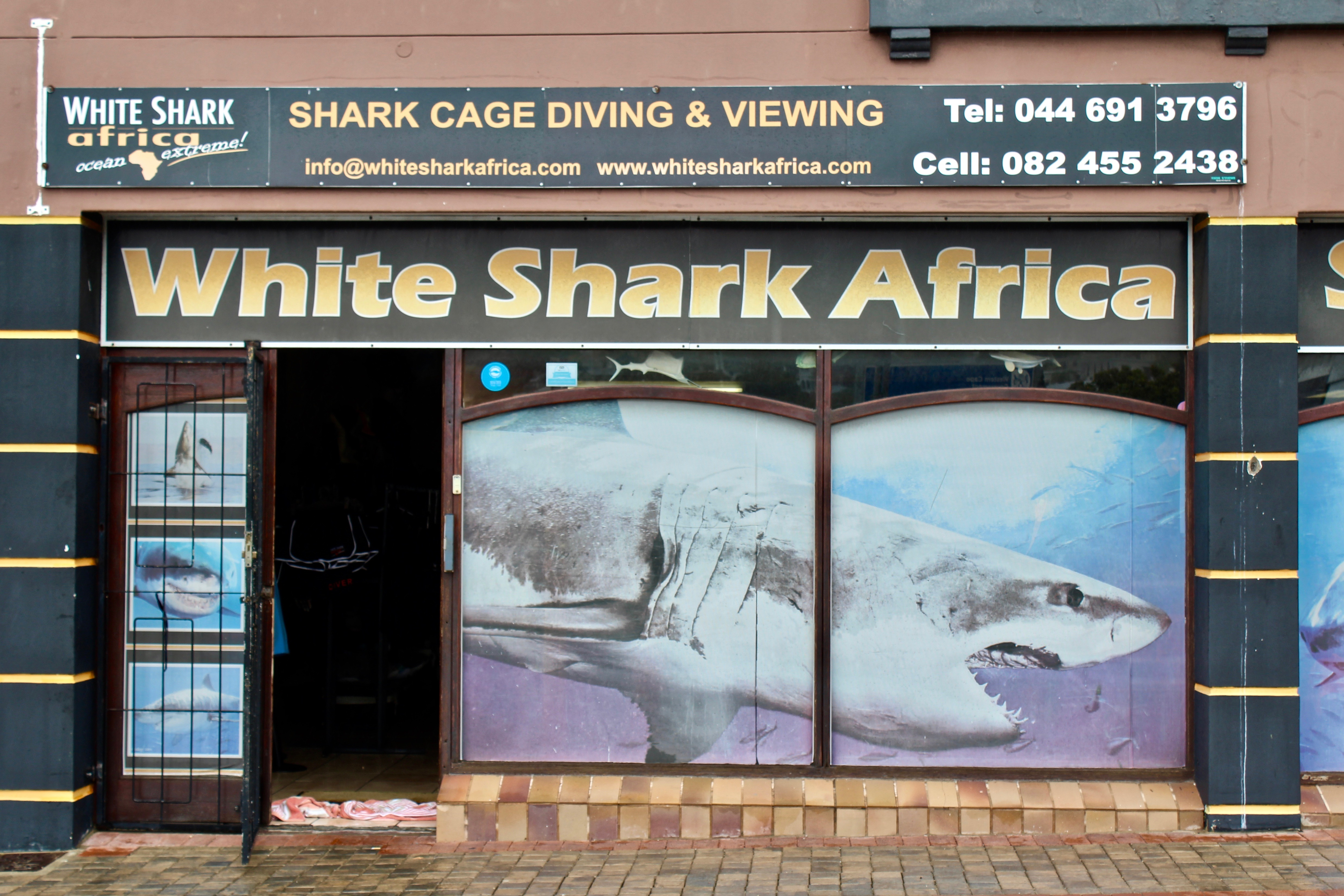 white shark africa south africa great white cage diving mossel bay