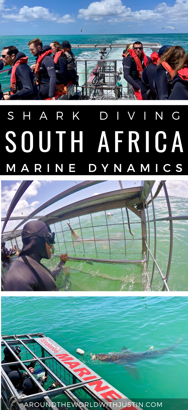marine dynamics south africa shark cage diving