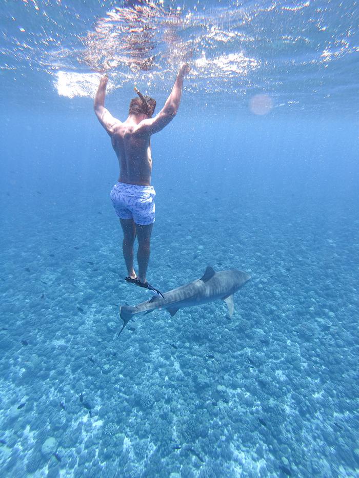tiger shark Tikehau