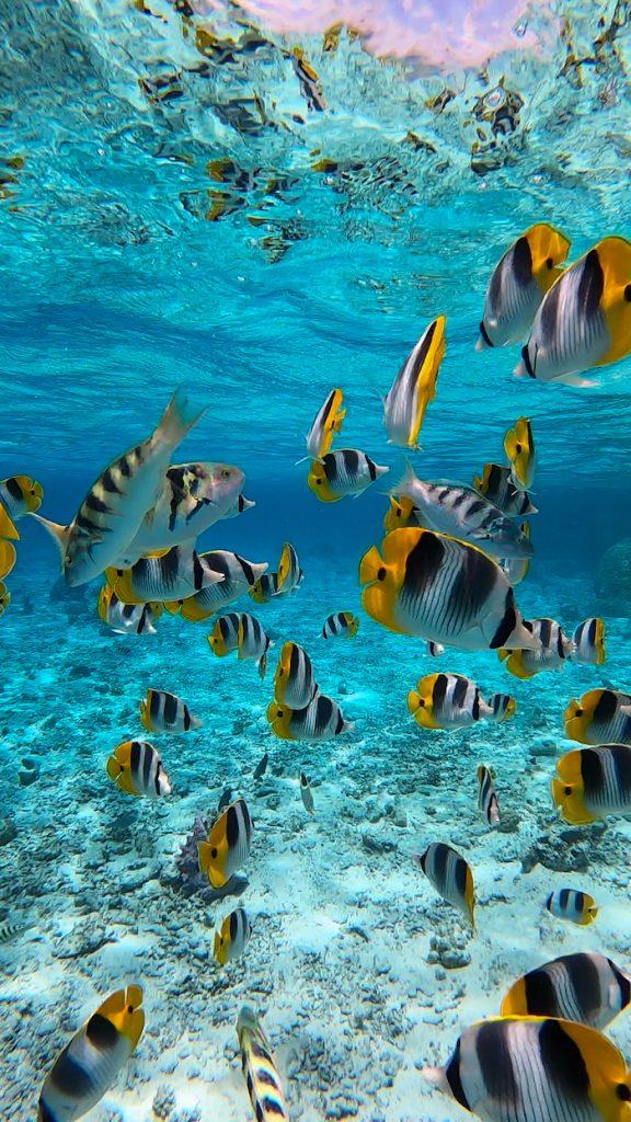 Islands of Tahiti