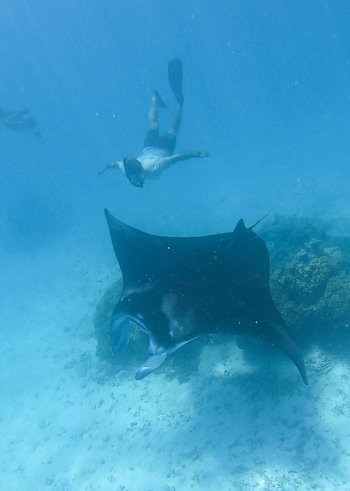 Tikehau manta rays
